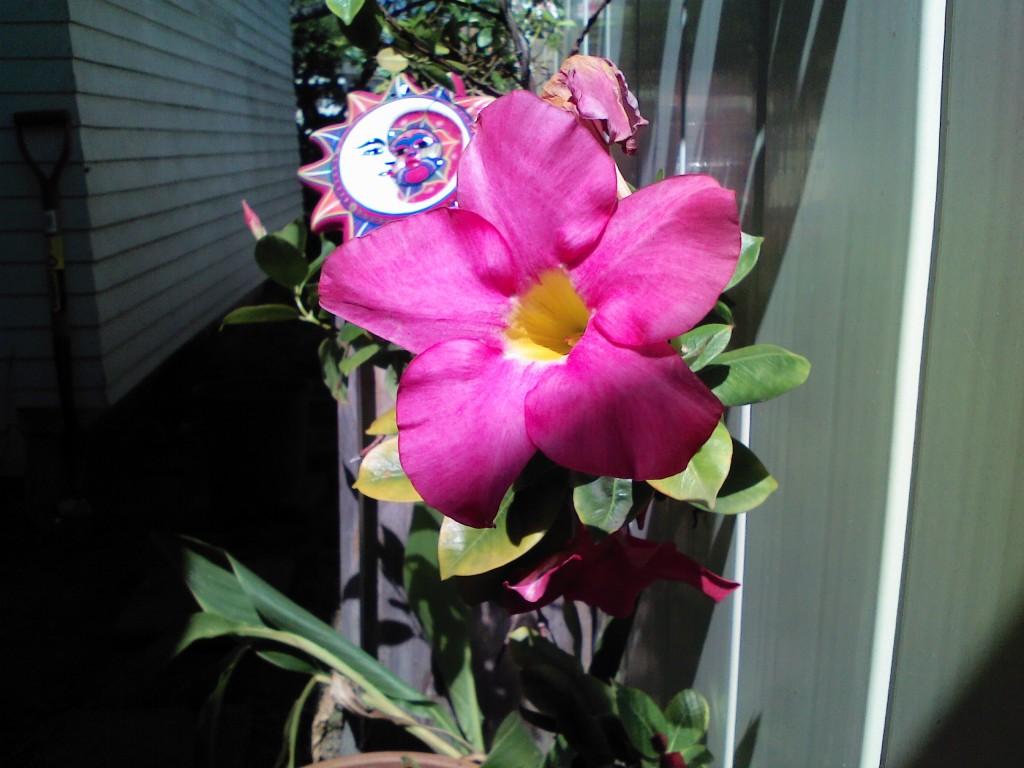 Flower Sun Plate